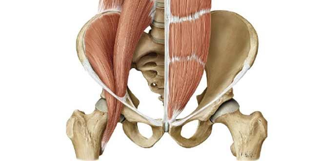عضلات لگن