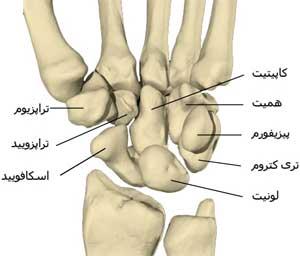 استخوانچه های مچ دست