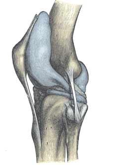 کپسول مفصلی زانو